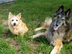Ruffin and Scout_1