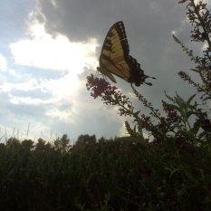 web_Butterfly-Garden-(12)
