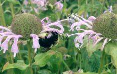 web_Butterfly-Garden-(16)