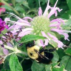 web_Butterfly-Garden-(23)
